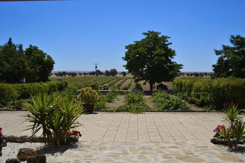 Winery in La Mancha